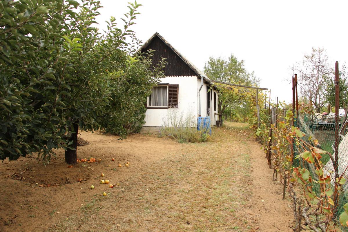 Eladó szőlő és pince