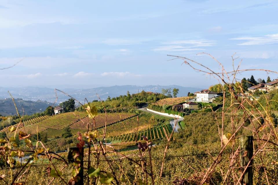 A Giribaldi szőlőbirtok