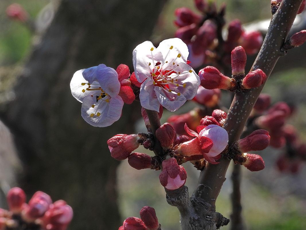 Tavasz a Monori Pincefaluban