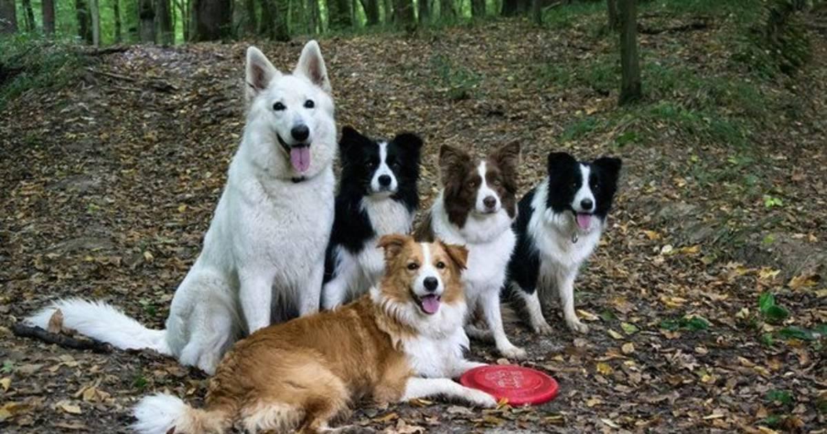 SZELÍD FARKAS VAGY SZŐRÖS GYEREK? A kutyaelme sajátosságai.