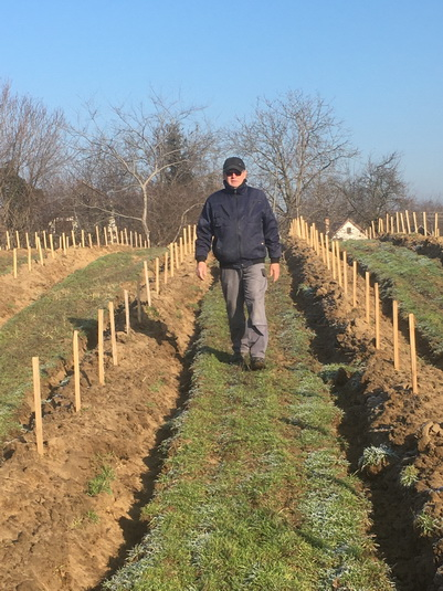 Sill Tibor a szőlőtelepítő