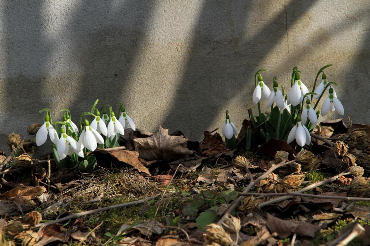 A tavasz első hírnöke