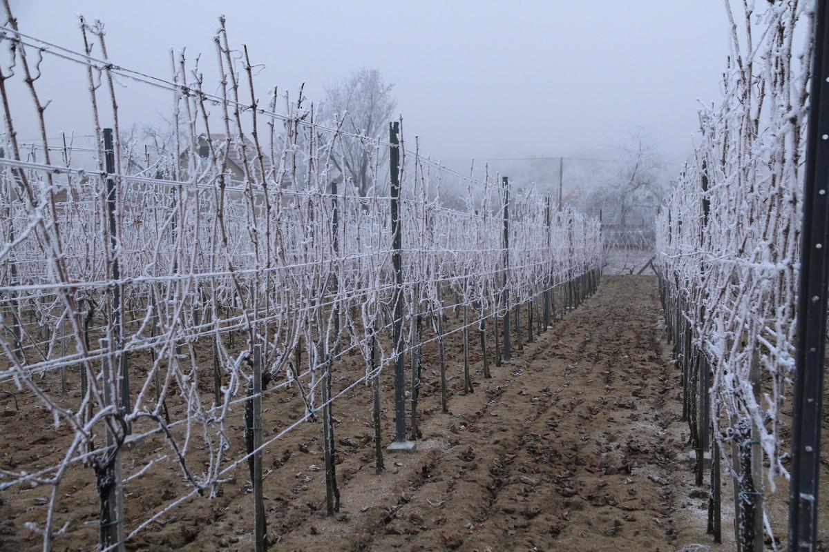 Tél a szőlőhegyen, Monori Strázsahegy
