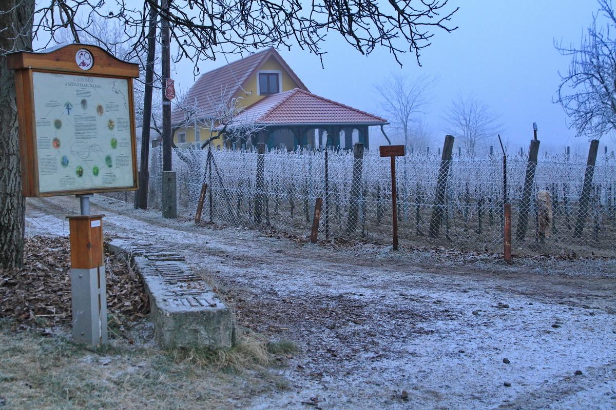 Tél a szőlőhegyen, Monori Pincefalu