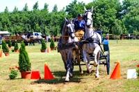 IX. Monori Fogathajtó verseny-képekben
