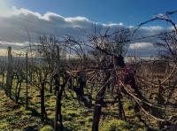 Gyenes Rita fotói szőlőinkről és pincéinkről