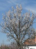 Minden jel arra mutat, hogy itt a tavasz