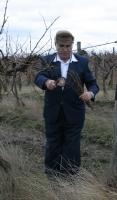 Szent Vince és a bor, azaz a Vince-napi vesszővágás