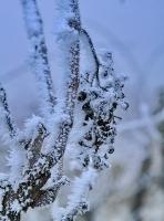 Téli séta a Strázsahegyen 2017 január 01
