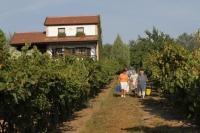 Bodor Wine House